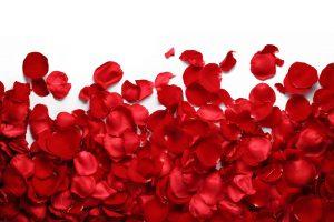 rozenblaadjes het kleine genoegen schoonheidsinstituut