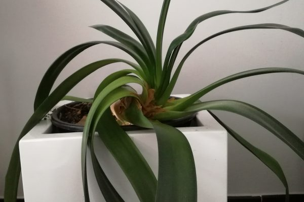 het-kleine-genoegen-plant